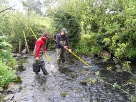 Electrofishing work on the Larne River, Northern Ireland
